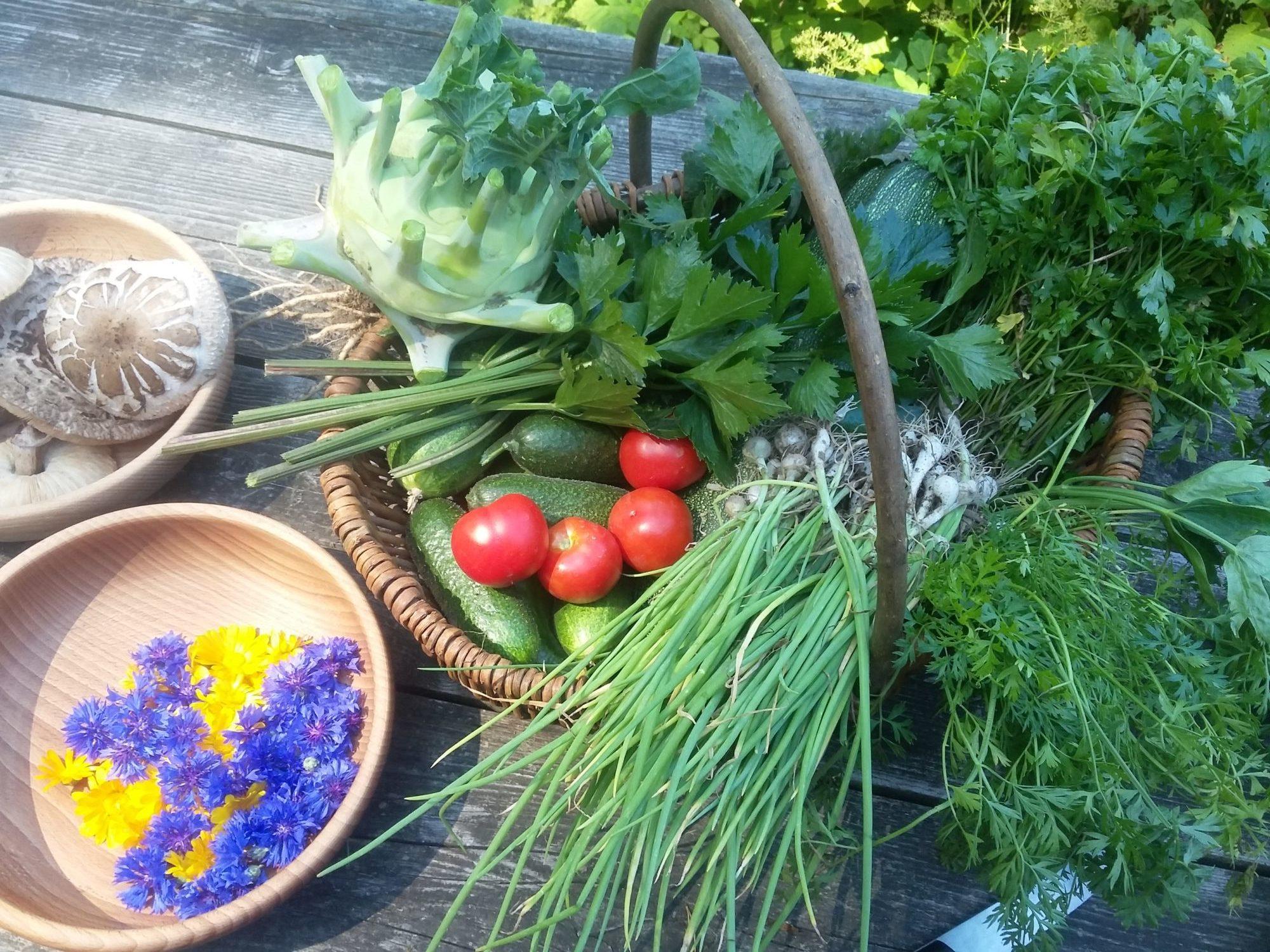 zelenina úroda ze záhonů